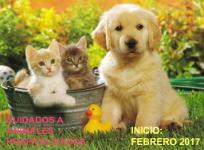 Curso gratuito cuidados a animales hospitalizados